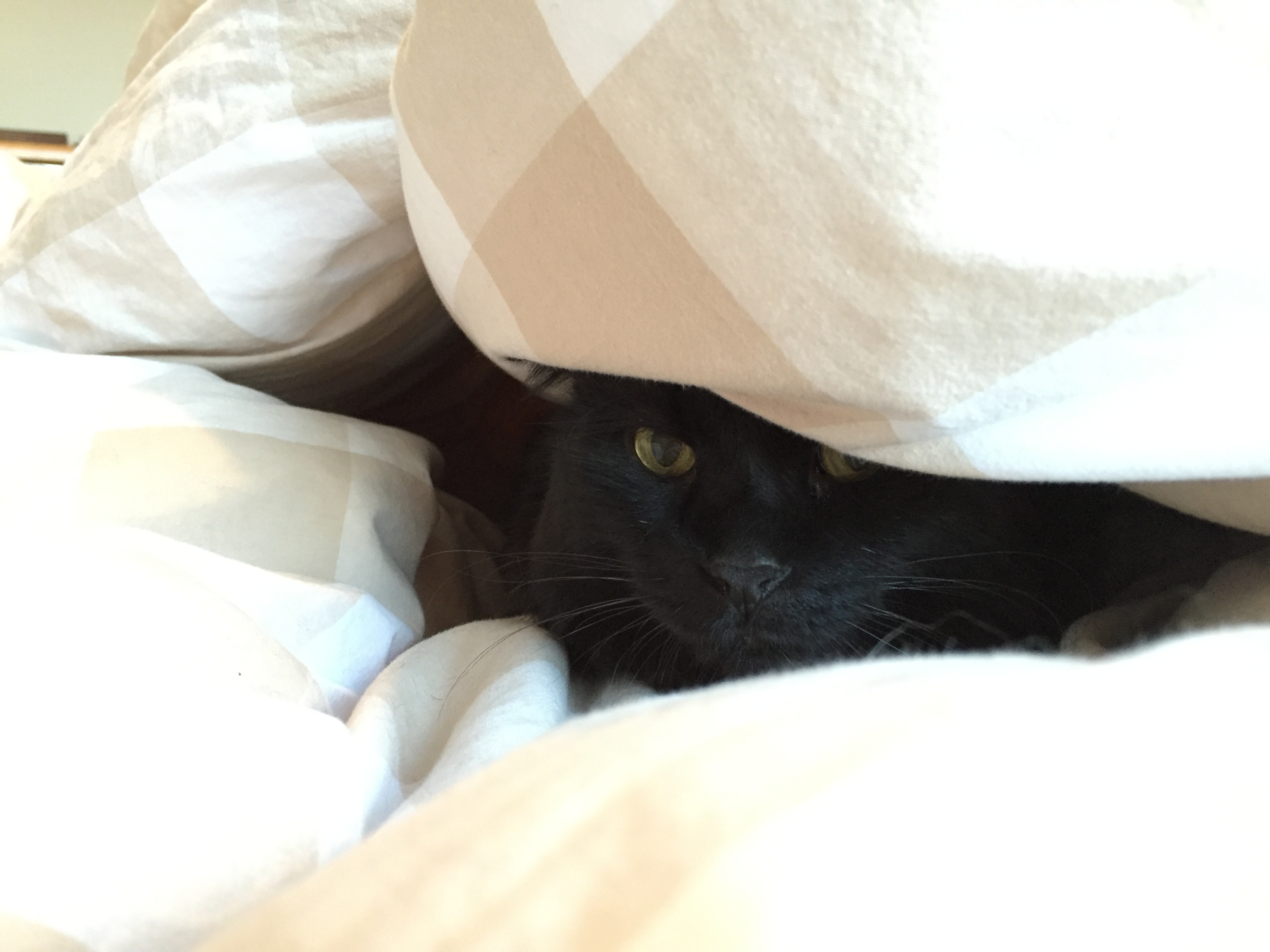 """Zeus under the covers"""